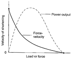 Power Force Graph