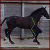 Equine - Trot SV